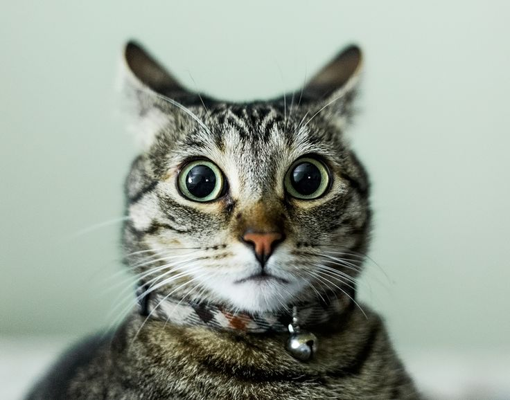 The look everyone gets when they're home alone and some knocks at the door...