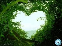 Image result for green hearts