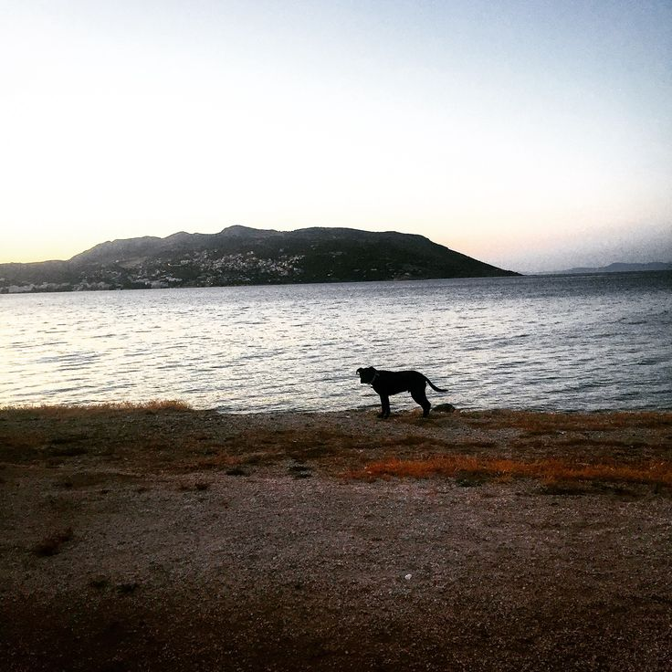 Mushi and the sunset