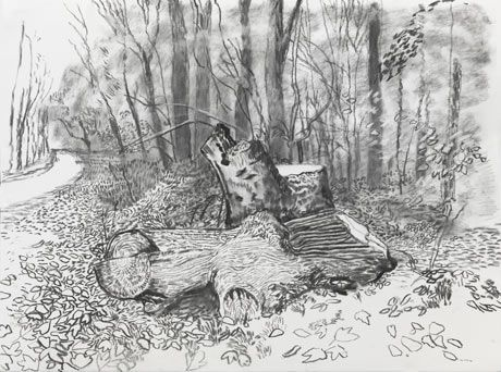 """David Hockney's new sketch of Totem After vandals chopped down the 12 ft tall tree stump. """"It was something I rather enjoyed,"""" Hockney said of he old tree. The 75 year old artist is convinced the stump had been targeted because it had become possibly the most famous piece of dead wood in Britain after he portrayed in several of his acclaimed landscapes of the countryside around his home in Bridlington. """"It is something that has made me depressed. It was just spite"""""""
