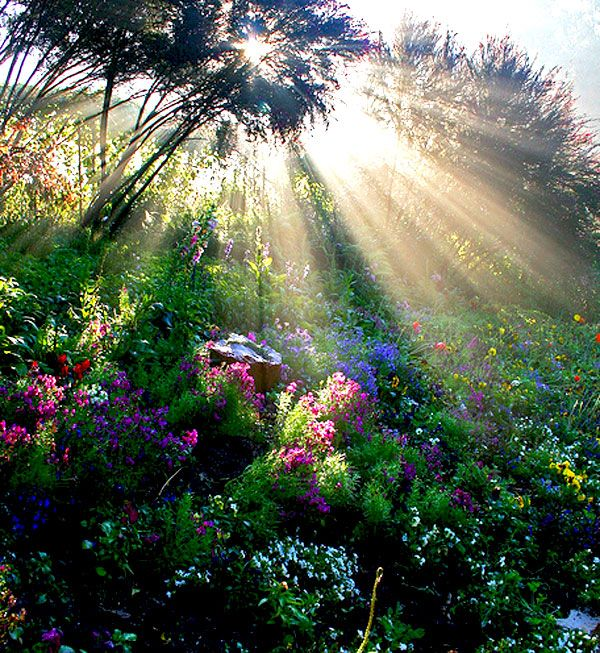 http://amolife.com/image/images/stories/Nature/landscapes/sun_rays_5.jpg