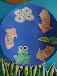 Life cycle of a frog.....could also do this on a paper plate.
