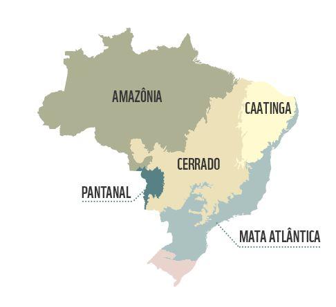 Biomas do Brasil   Cerrado   WWF Brasil