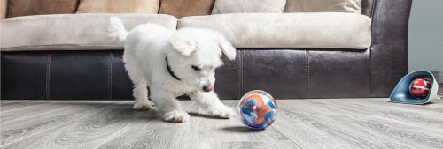 5 Winners: Win a Pebby! Play With Your Pet Remotely! (01/31)... IFTTT reddit giveaways freebies contests
