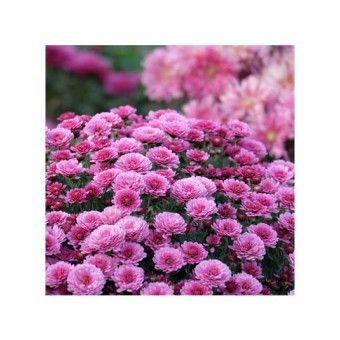 ARTİKEL Çiçek Bahçesi Bulaşık Makinesi Sticker BS-229