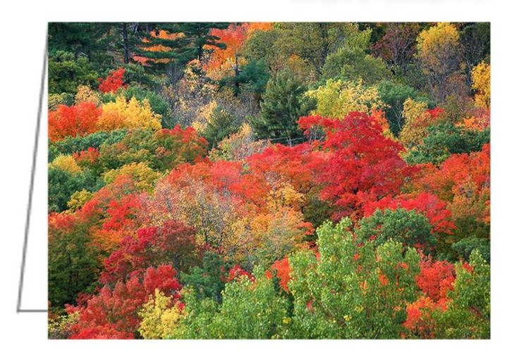 """Fall colours in Gatineau Park - Greeting Card. Autumn colours of the trees near Ottawa, Ontario. 5"""" x 7"""". Blank inside. Includes envelope. Buy online at Rob's Cards and Prints."""