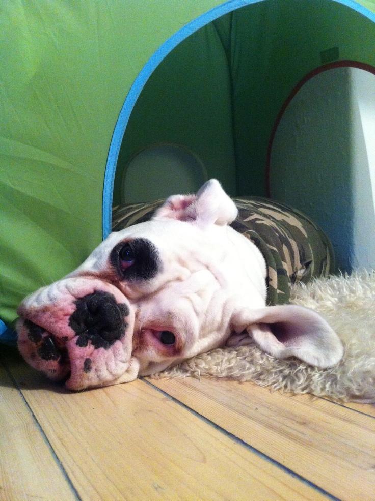 #lulu i teltet. Chillaxing på høyt nivå.