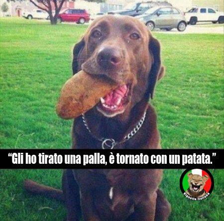 Questo #cane  è tornato con una patata invece della palla lanciata, sembra più furbo della media. #Vignetta e #Vignette, #immagini #divertenti in #italiano e #italiane.