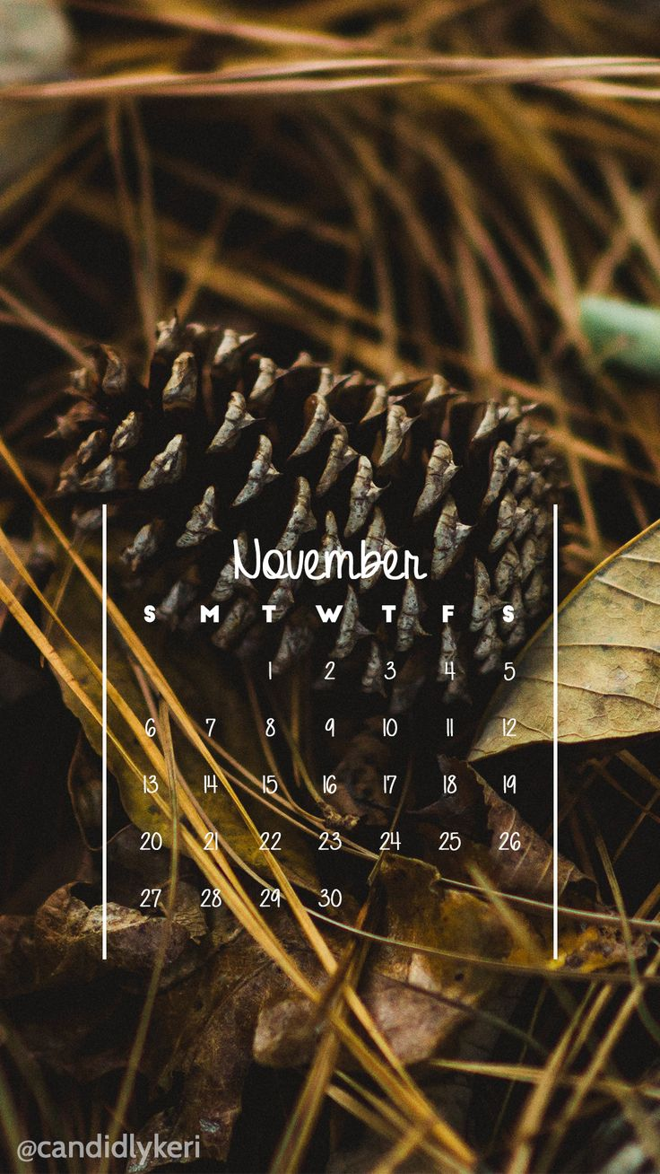 Pine cone woods photography fall scene pine needles November calendar 2016 wallpaper you can download for free on the blog! For any device; mobile, desktop, iphone, android!