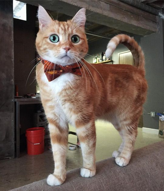 Cute and stylish cat