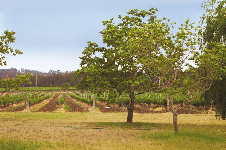 De Bortoli Hunter Valley Estate. http://www.debortoli.com.au/home.html