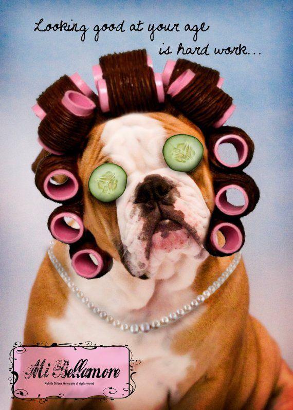 Baggybulldogs all about english bulldogs bulldog for Salon anglais