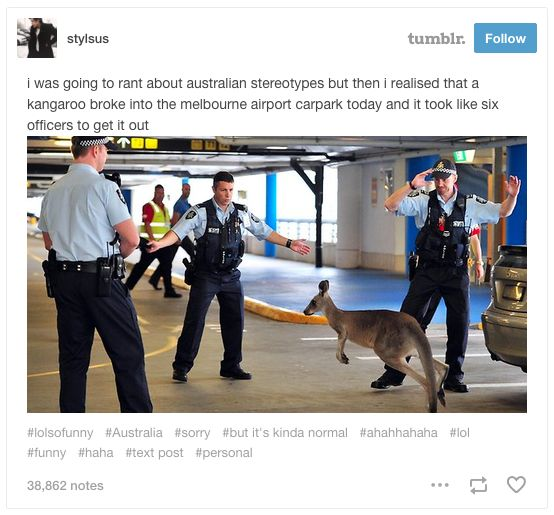 And this rude as hell kangaroo. | 29 Times Tumblr Just Couldn't Take Australian Animals Seriously