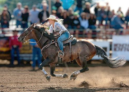 my past love ... barrel racing ...love to go fast!