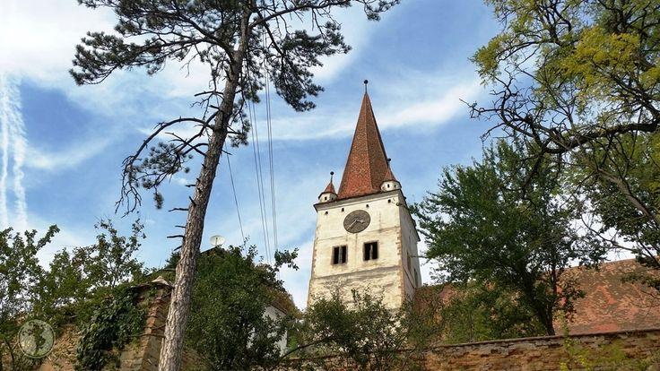 Sunt convinsă că toți cei care vizitează biserica fortificată din Cincu/Gross-Schenk, au parte de o surpriză plăcută. La început de septembrie, dealurile domoale acoperite de brândușe de toamnă ne-...