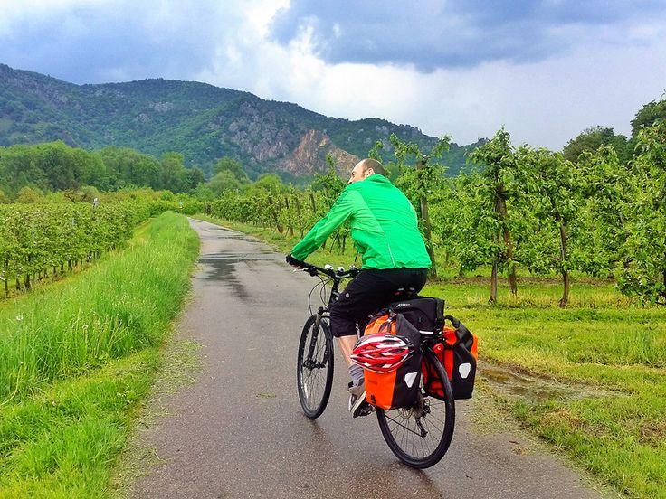 Cycling through vineyards in the UNESCO Wachau Valley