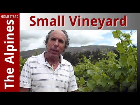A Tiny Vineyard on a Small Land in a Small Village, Riviersonderend, Sou...