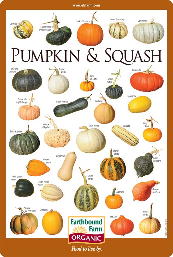Pumpkin & Squash ID Chart | Earthbound Farm Organic