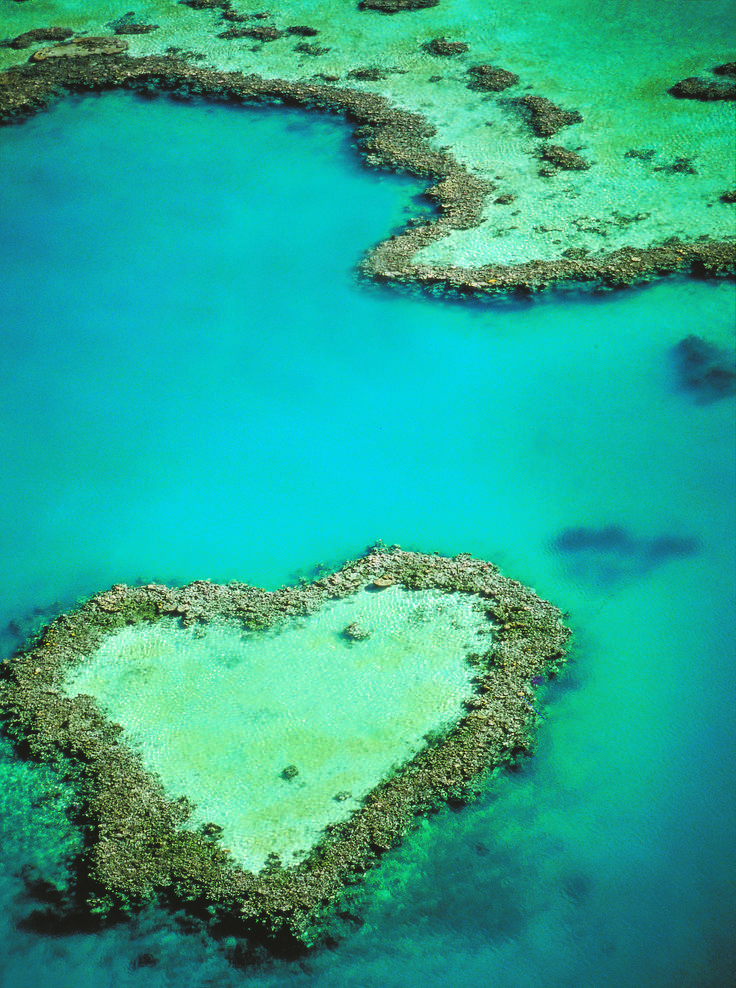 The Great Barrier Reef is breathtaking! It's considered ...  The Great Barri...