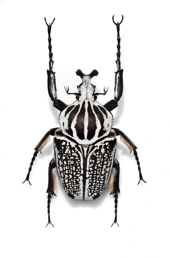 114 best Bugs, Beetles, Insects, etc. images on Pinterest