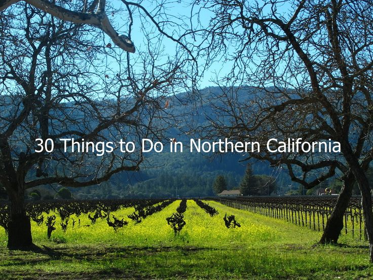 Northern California: 30 Things to Do plus insider tips to this beautiful region | From This Is My Happiness.com #NorthernCalifornia #California #travel