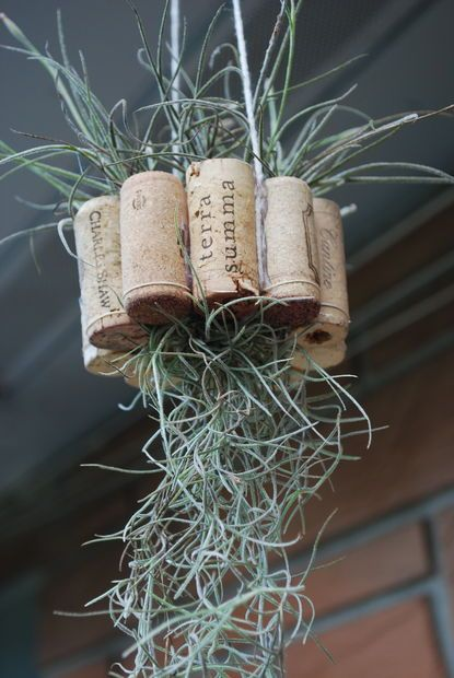 Hanging air plant basket from recycled wine corks for Air plant holder ideas