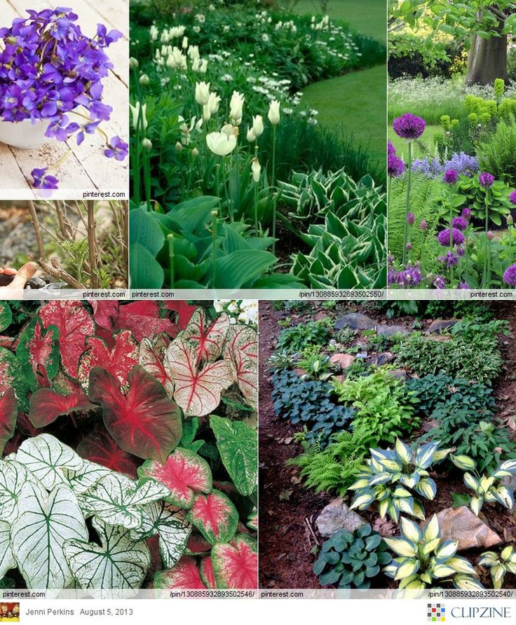 Flower Garden Ideas For Shade 879 best shade gardens images on pinterest | flower gardening