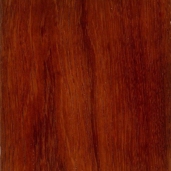 Andaman Padauk Red Woods Pinterest Search And Woods