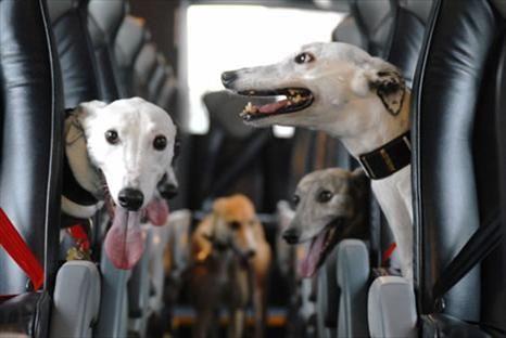 The Greyhound Bus - hahahaha!