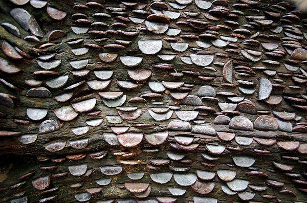 money tree close up