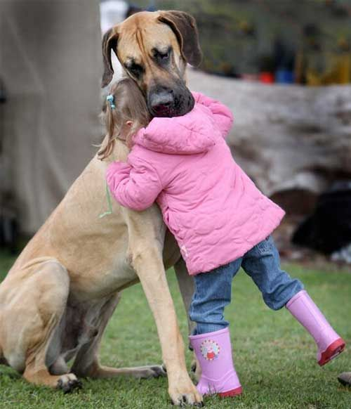 19 Gentle Giant Dogs with Their Tiny Human Friends