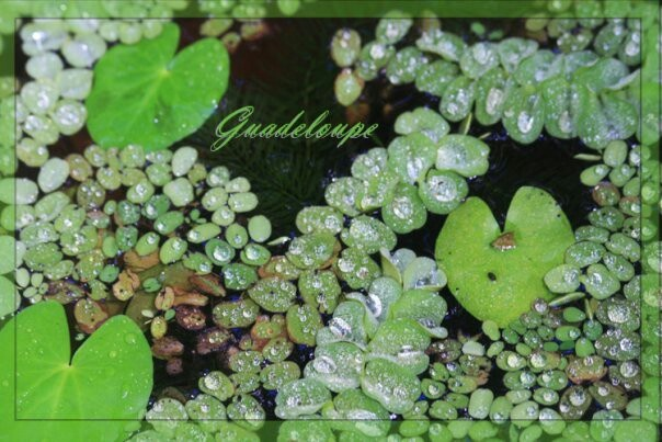 Plantscard