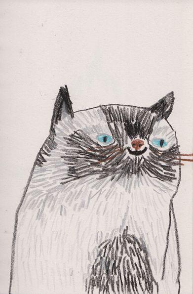 tom edwards: Cat Art, Edwards Illustration, Funny Cat, Siamese Cat, Cat Illustration, Tomedwards, Art Illustration, Drawing