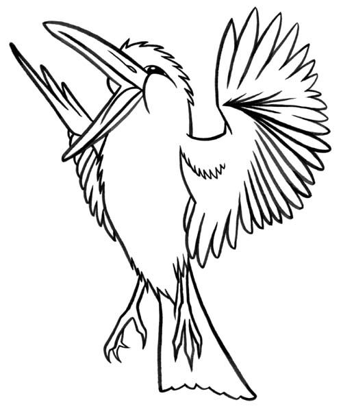 cassowary coloring pages - photo#40