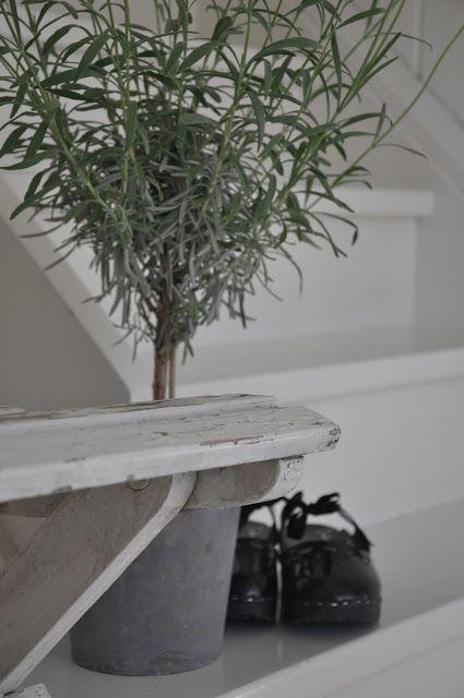 lavendel op stam, mooi bij de deuren en het hekje