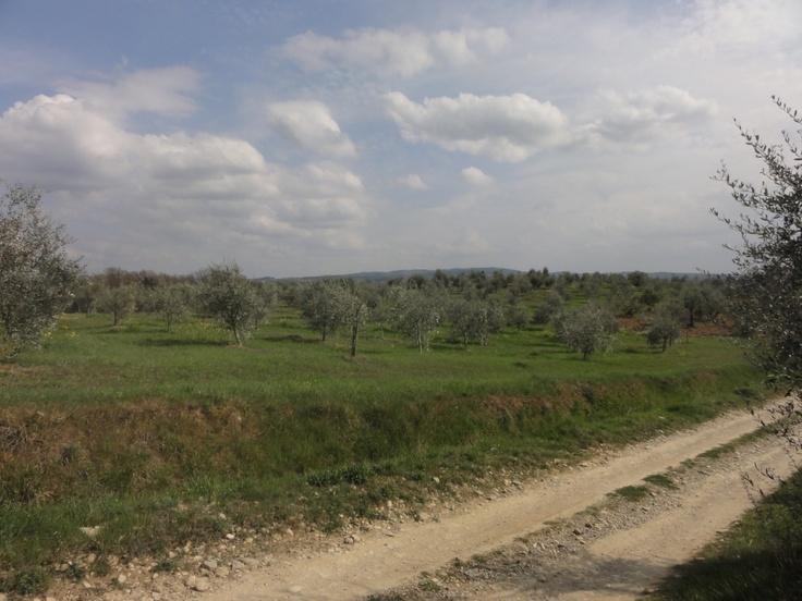 Road to the olive trees field - Photo by Bianca Corti