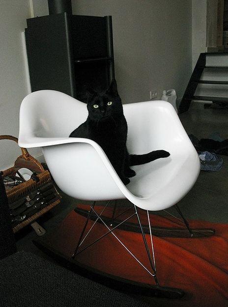 Black cat on a white Eames RAR Rocker