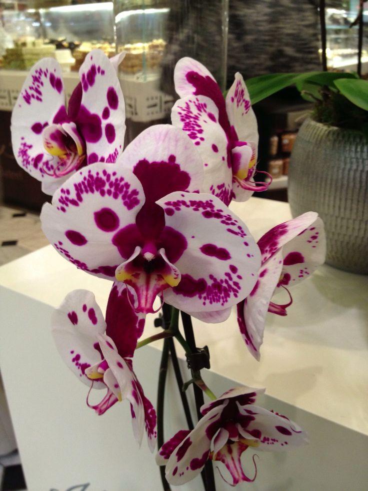 .Orchidée