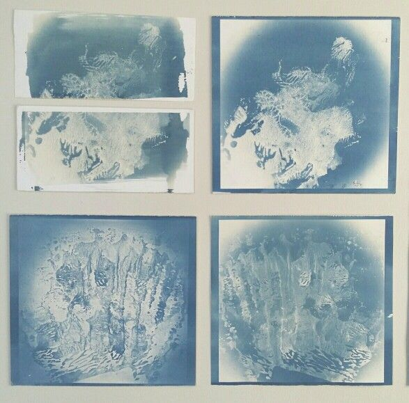 """from """"Reef Series"""", 2014 - cyanotype      (chloe  obermeyer)"""