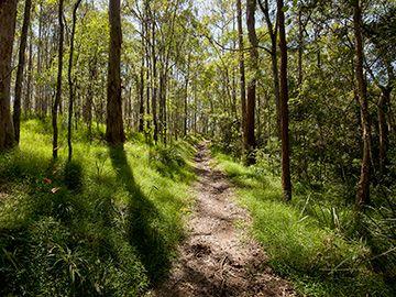 Hike near Brisbane