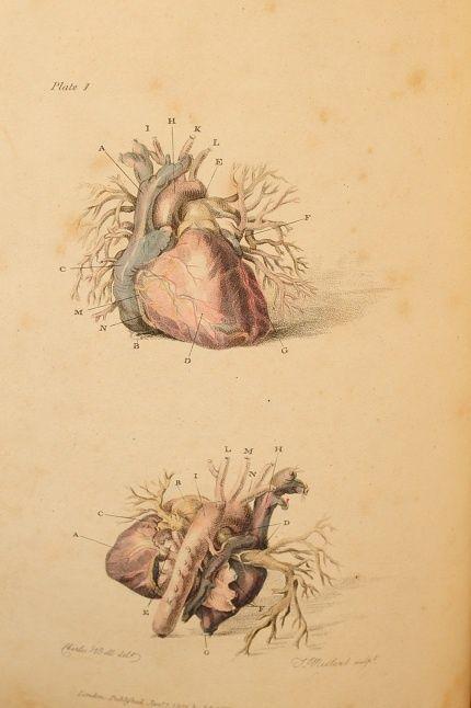 71 besten HOME IS WHERE YOUR HEART IS Bilder auf Pinterest   Tapeten ...