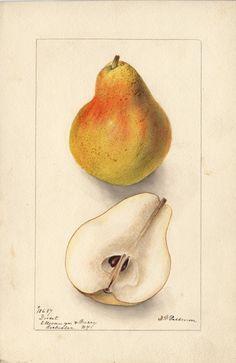 dorset.jpg (630×971) Artist: Deborah G. Passmore. From Ellwanger & Barry, Rochester, New York, October 28, 1899.
