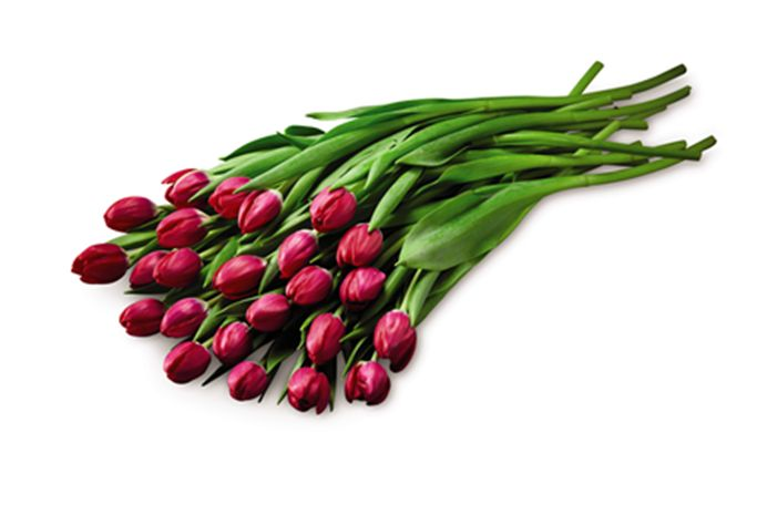 A Dozen Tulips #AldiWishList