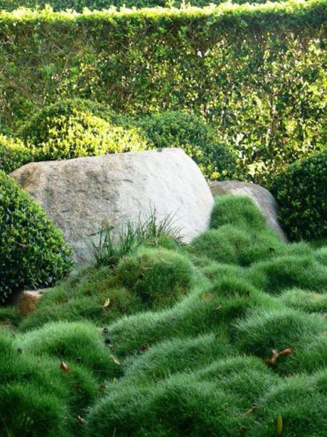 228 best images about replace the lawn on pinterest for Low mounding ornamental grasses