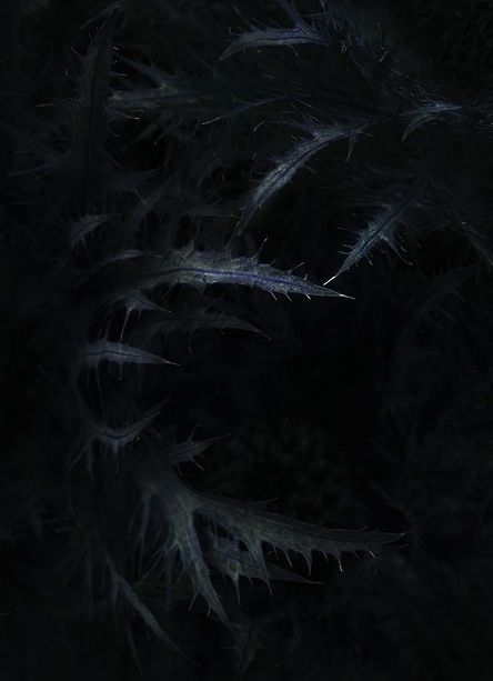 Tenebris // Black Shards