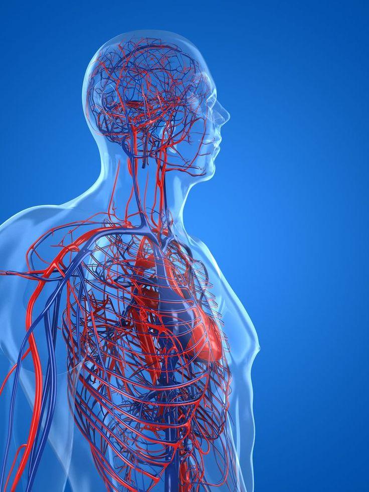 439 besten Anatomy Bilder auf Pinterest   Anatomie, Fitnessstudio ...
