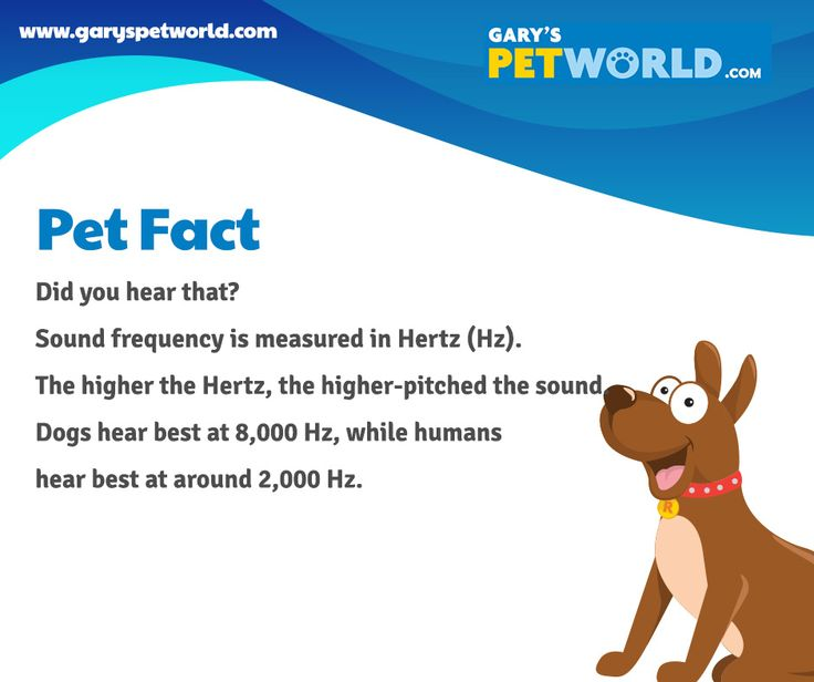 Did you hear that? Sound frequency is measured in Hertz (Hz). The higher the Hertz, the higher-pitched the sound. Dogs hear best at 8,000 Hz, while humans hear best at around 2,000 Hz. #petfact #pets #petworldie