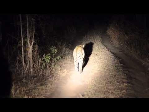 www.sunsafaris.com #leopard #wildlife #umkumbe #safari #lodge #africa #sabi #sands #game #reserve #kruger #national #park
