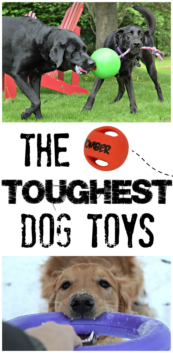 Tired of your hard earned money being shredded in minutes?! Check out this list of the toughest dog toys on the market to find the perfect match for your energetic pup! Broken down into categories like chew, tug, fetch and plush depending on your dogs preferred style of play!