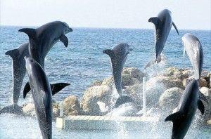 Dolphin Cove Jamaica in Ocho Rios